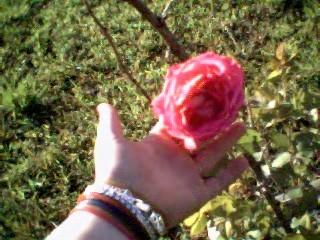 roseflower.jpg