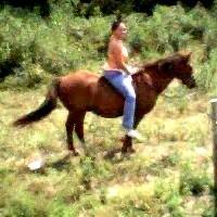 stephonhorse.jpg